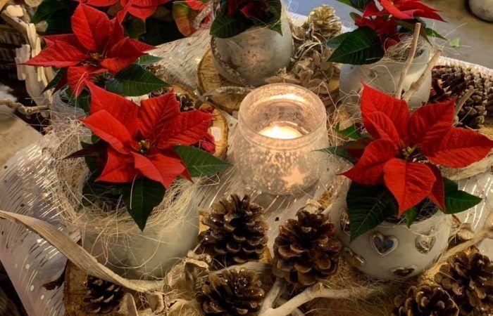kerststerren, kweker